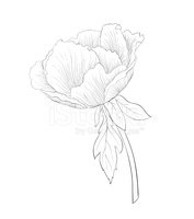 Vector,Floral Pattern,Peony...