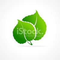 Leaf,Growth,Business,Summer...