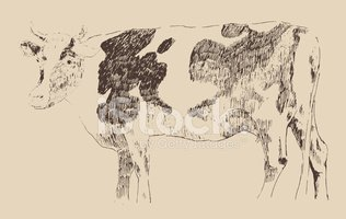 Photograph,Cattle,Cow,Engra...