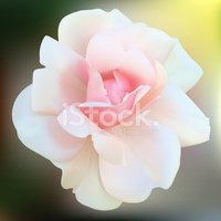 Ornamental Garden,Rose - Fl...