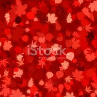 Image,Red,Branch,Winter,Oct...