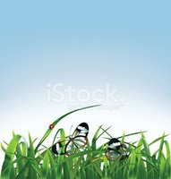 Grass,Blue,Green Color,Sky,...