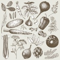 Engraved Image,Vegetable,Fo...