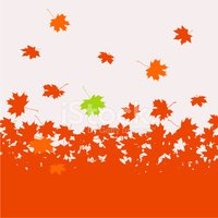 Autumn background - maple leaves