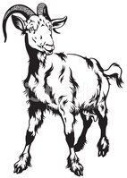 Goat,Fortune Telling,Sheep,...