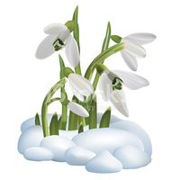 Spring Snowdrop Flowers On A Vector Illustration Stock Vectors