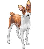Dog,Cute,Basenji,Sight Houn...