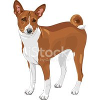 Vector,Dog,Basenji,Animal E...