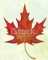 Maple Leaf,Leaf,Canada,Ilus...