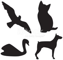 Domestic Cat,Dog,Silhouette...