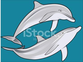 Dolphin,Sea Life,Vector,Ilu...