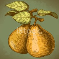 Ilustration,Pear,Watercolor...