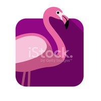 Flat,Flamingo,Bird,Design,I...
