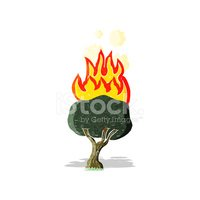 Tree,Fire - Natural Phenome...