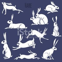 Hare,Shape,Backgrounds,Sitt...