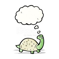 Thinking,Tortoise,Turtle,Bi...