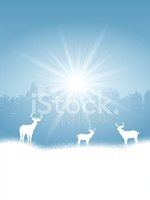 Christmas,Sky,Wildlife,Anim...