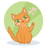Domestic Cat,Backgrounds,Ve...