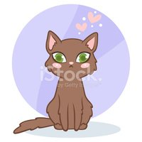 Domestic Cat,Young Animal,A...
