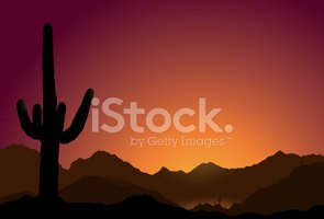 Arizona,Cactus,Sunset,Tucso...