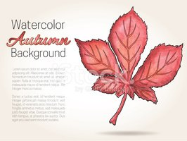 Autumn Watercolor Background With Chestnut Leaf