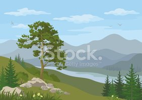 Pine,Mountain,Tree,Forest,W...