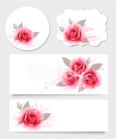 Rose - Flower,Backgrounds,W...