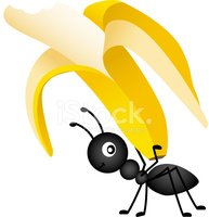 Ant Magnifying Glass Clipart