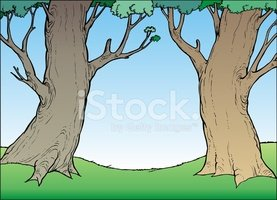Tree,Tree Trunk,Forest,Two ...
