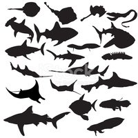 Sea Life,Silhouette,Fish,Ma...