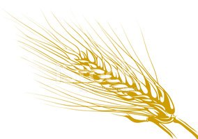 Vector Drawing Of Wheat Clipart Images