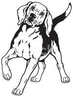 Hunting Dog,Standing,Front ...