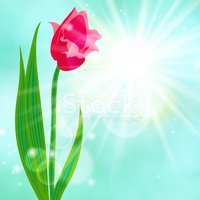 Shiny,Tulip,Mothers Day,Eas...