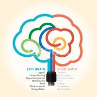 Human Brain,Left Handed,Net...