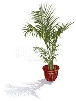 Potted Plant,Houseplant,Pla...