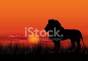 African landscape with lion animal silhouette. Savanna sunset ba