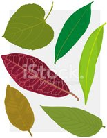 Botany,Leaf,Healthy Lifesty...
