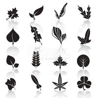 Beech Leaf,Computer Icon,Sy...