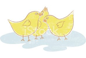 Baby Chicken,Young Bird,Chi...