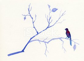 Bird,Branch,Watercolor Pain...