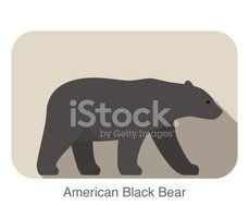 Bear,American Black Bear,Co...