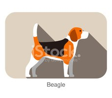 Beagle,Dog,Animal,Isolated,...