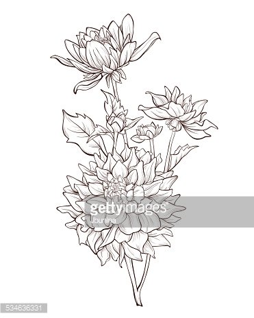 Dahlia Vintage Hand Drawing Background With Stock Vectors
