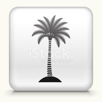 Palm Tree,Plant,Computer Ic...
