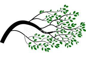 Cartoon Tree Branch Clipart Images High Res Premium Images