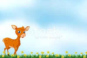 Deer,Wildlife,Animal,Outdoo...