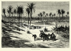 Spanish Pictures - Palmeral or Palm Forest of Elche