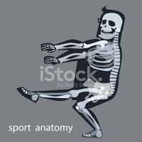 Human Bone,Training Class,T...