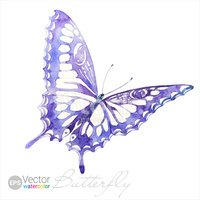 Butterfly - Insect,Insect,D...