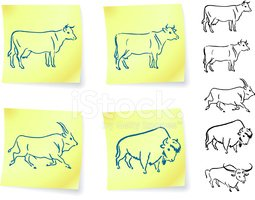 Cow,American Bison,European...